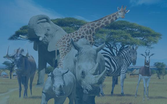 safari-de-peaugres actif